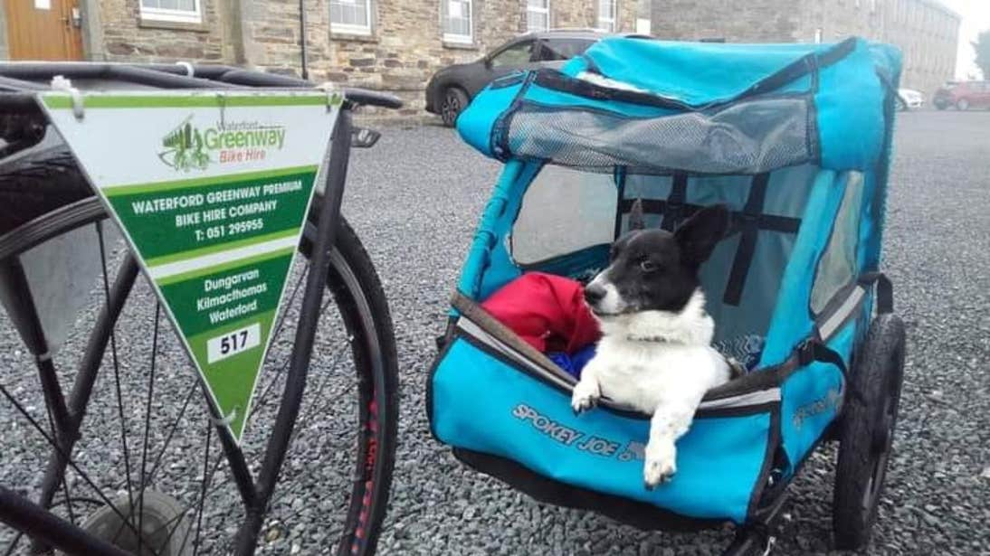 Dog sitting in a bike carrier on the Waterford Greenway