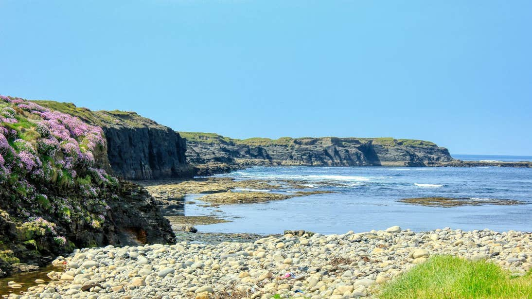 Flowers blooming near rocks at Spanish Point, Clare