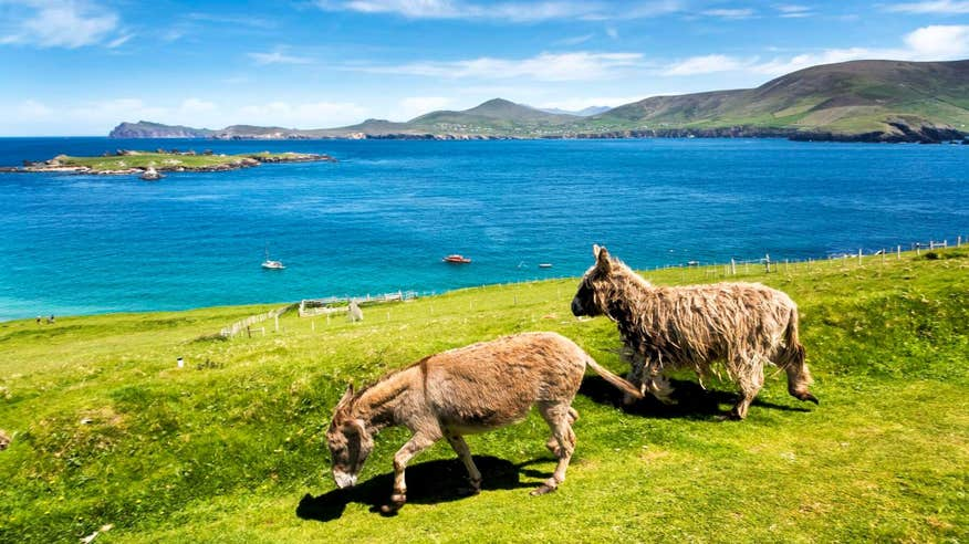 Take in the breathtaking view of The Blasket Islands