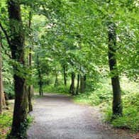 Image of Rathwood Forest Walks