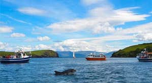Dingle Dolphin Tours – Harbour Cruise