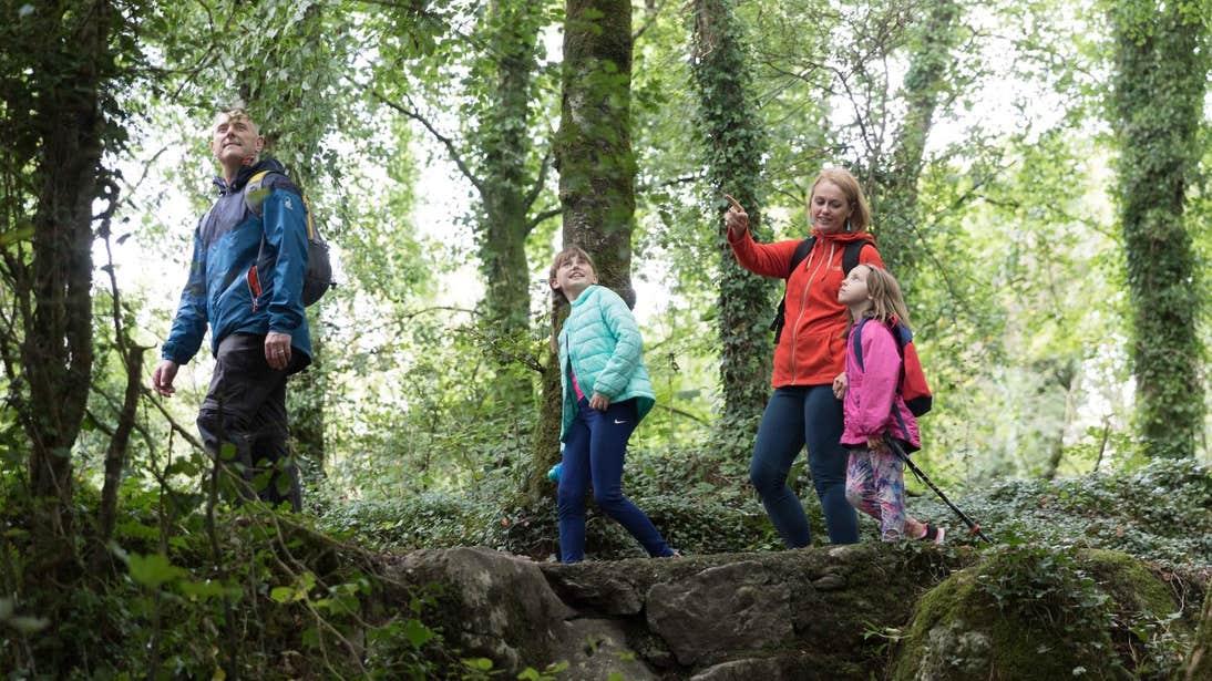 Family walking through Cratloe Woods in Clare