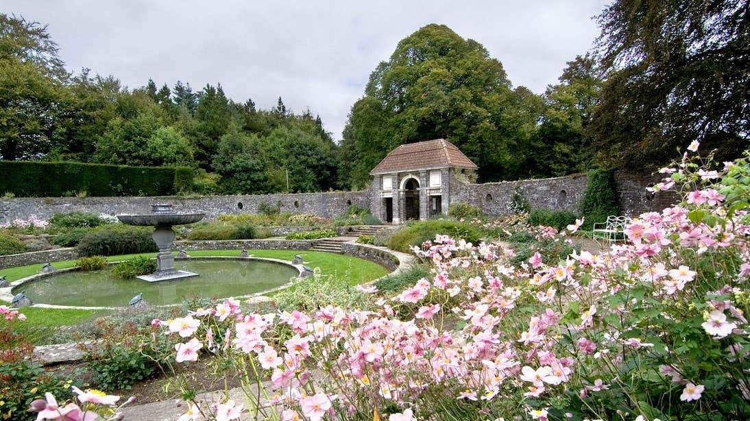 Pink flowers at Heywood Gardens  in County Laois