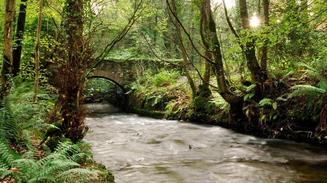 Stone bridge over a river in Dun na Ri Forest Park County Cavan