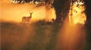 Sun Rise at phoenix park