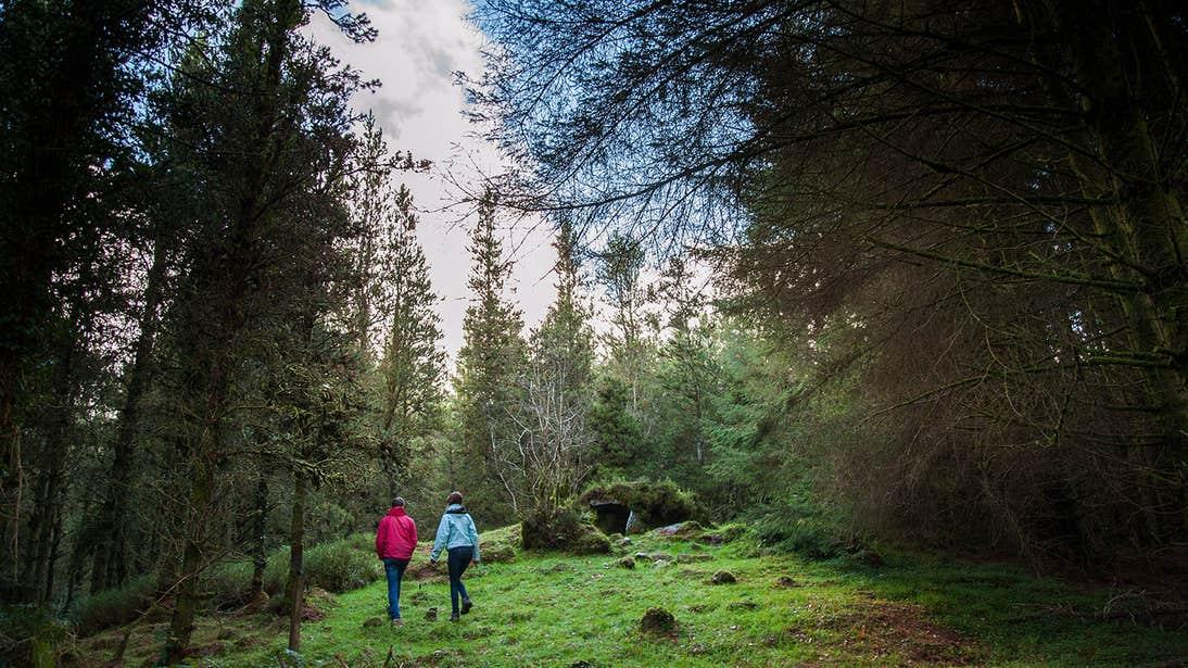 People walking through a forest in Cavan Burren Park, County Cavan