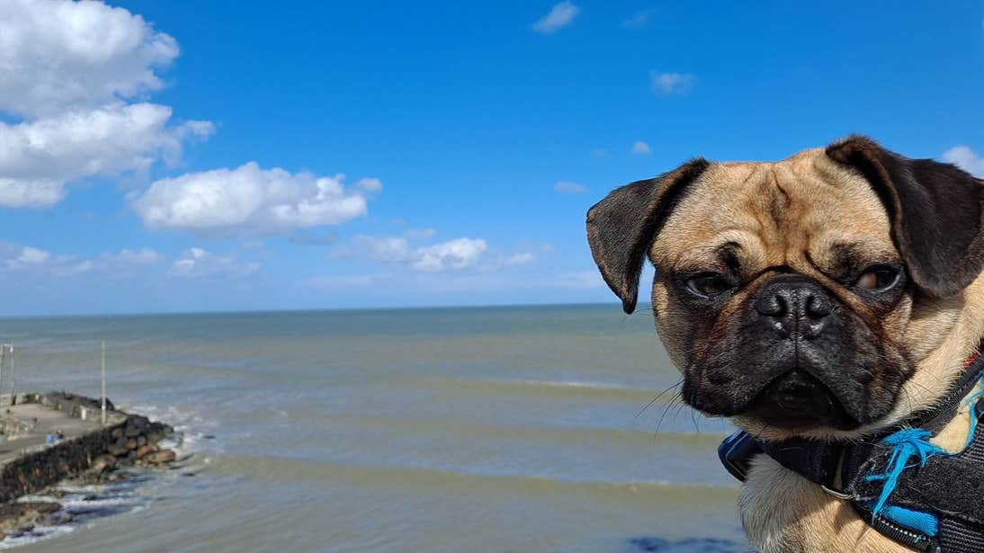 Dog beside the sea in Cahore