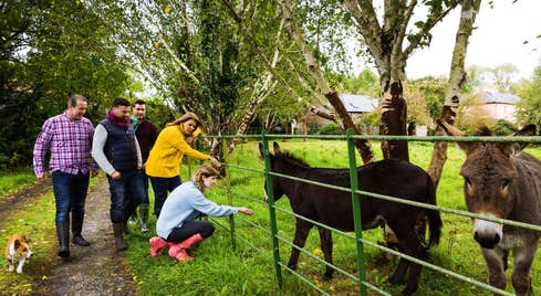 People petting donkeys at a farm in County Limerick