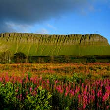 Flowers growing at the base of Benbulben in Sligo