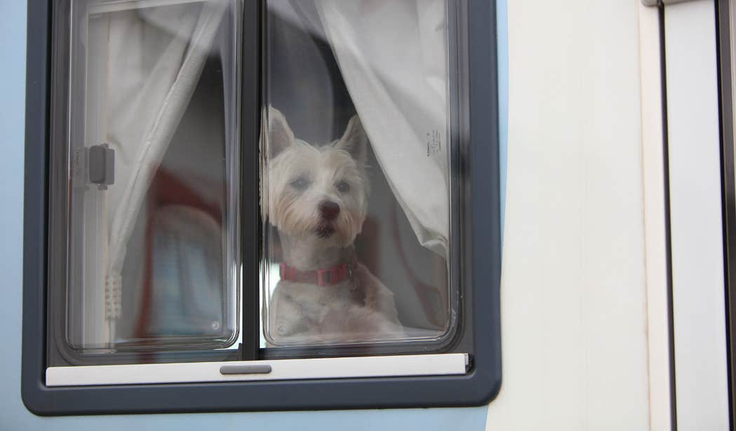 Dog looking out the window of a caravan at Clifden Eco Camping and Caravanning Park in Galway.