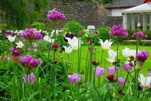 Woodland Cottage Garden