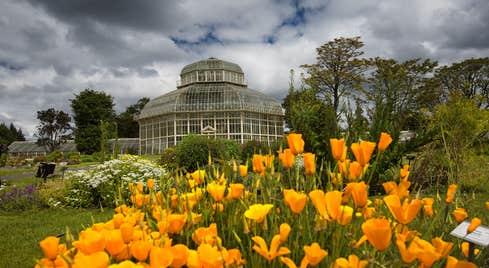 Orange flowers outside the National Botanic Gardens, Glasnevin, Dublin