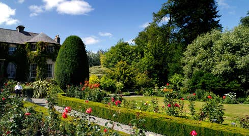 Roses' in bloom in a garden outside Altamont House, Carlow