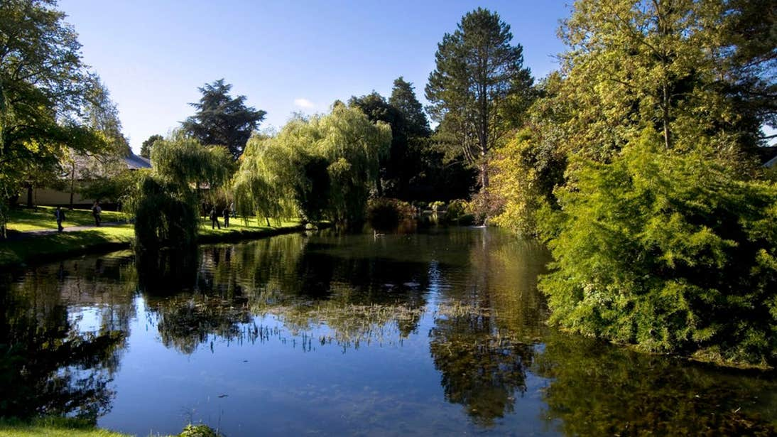 Pond at the Japanese Gardens