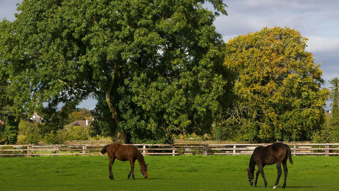 Horses in a field at The National Stud, Tully, Co. Kildare