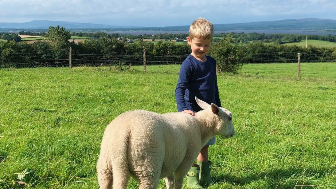 A boy and a sheep at Brookfield Farm, Tipperary