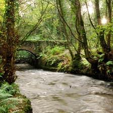 Image of Dun na Rí Forest Park in County Cavan