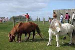Nore Valley Park Open Farm