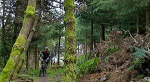 Ballyhoura Streamhill Loop