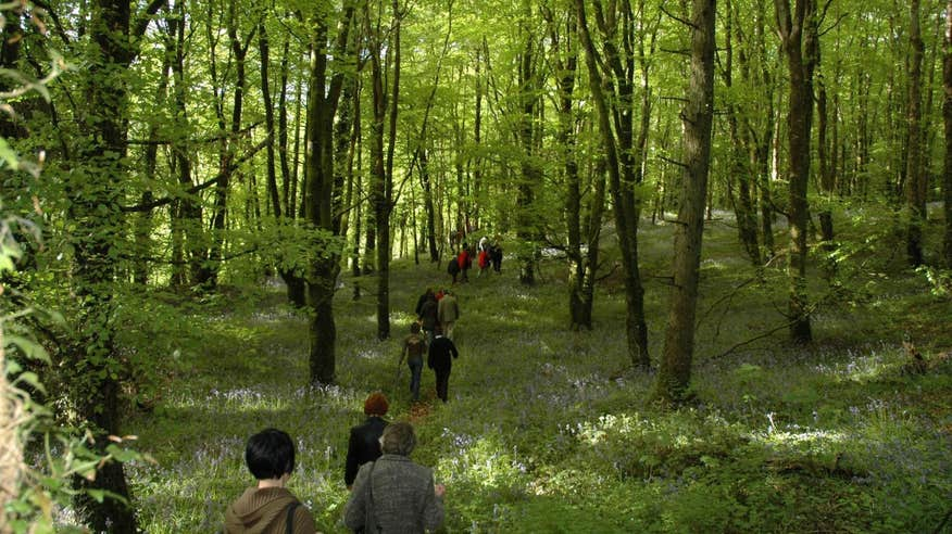 Discover the beauty of the Slieve Bloom mountains.