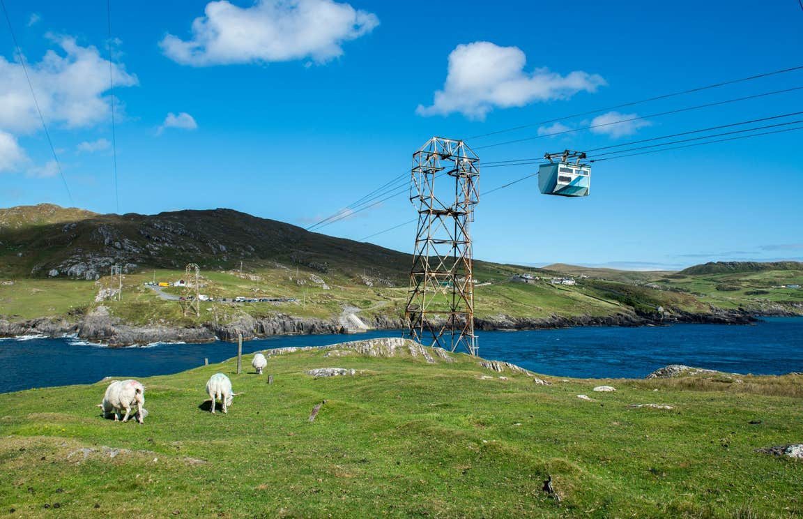 Sheep eating grass beneath Dursey Island Cable Car in Cork